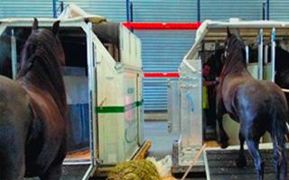 Especialistas en transporte de caballos